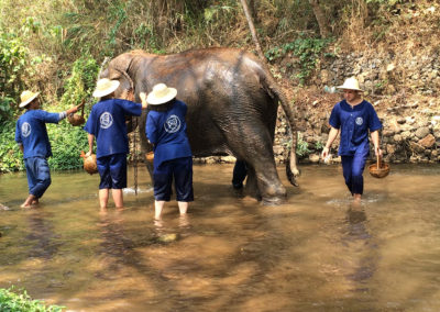 thailand-heritage-journey-elephant-camp-2