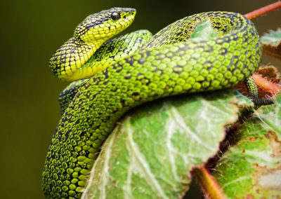 Costa-Rica-Heritage-Journey_CR-snake-copy