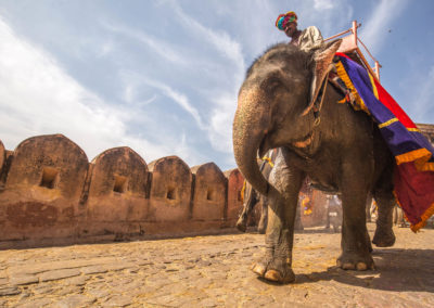 India-Heritage-Journey-_-India-elephants-copy