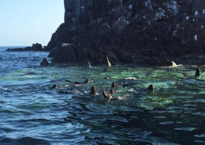 Credit-S.Bradley-Baja-Family-sea-lions