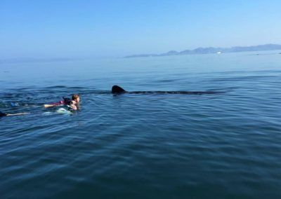 Credit S.Bradley Baja Family swimming with whale sharks