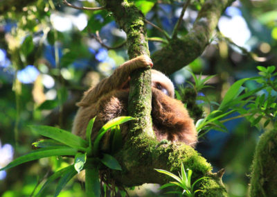 Sloth-in-San-Juan-River