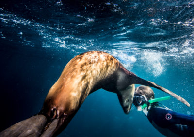 Swimming with Sea Lions (1)